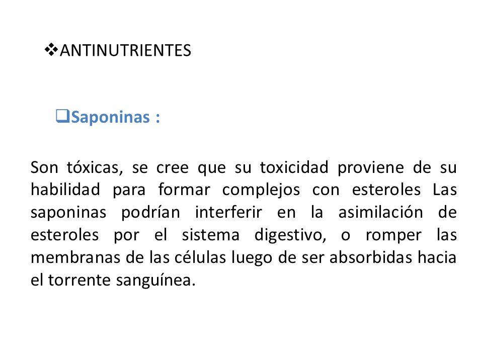 ANTINUTRIENTES Saponinas : Son tóxicas, se cree que su toxicidad proviene de su habilidad para formar complejos con esteroles Las saponinas podrían in