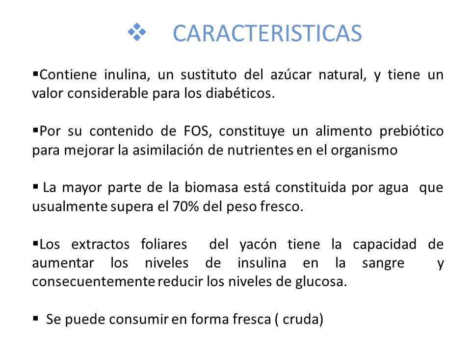 CARACTERISTICAS Contiene inulina, un sustituto del azúcar natural, y tiene un valor considerable para los diabéticos. Por su contenido de FOS, constit