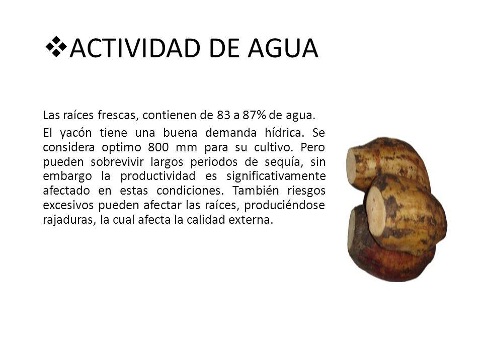 ACTIVIDAD DE AGUA Las raíces frescas, contienen de 83 a 87% de agua. El yacón tiene una buena demanda hídrica. Se considera optimo 800 mm para su cult