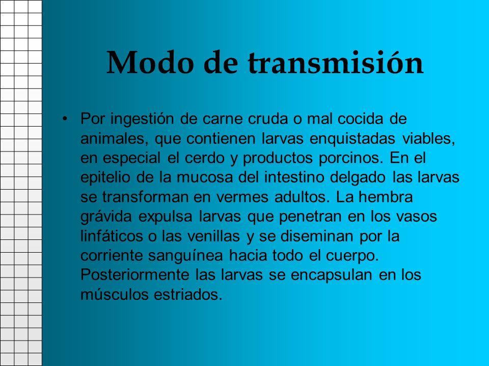 Modo de transmisión Por ingestión de carne cruda o mal cocida de animales, que contienen larvas enquistadas viables, en especial el cerdo y productos
