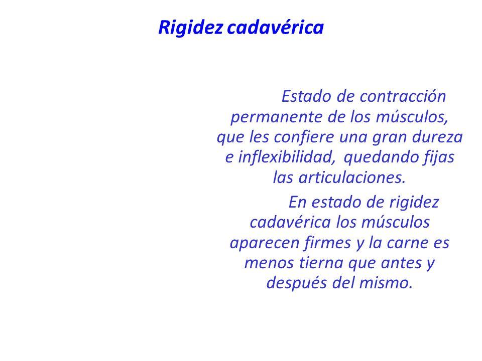 Rigidez cadavérica Estado de contracción permanente de los músculos, que les confiere una gran dureza e inflexibilidad, quedando fijas las articulacio