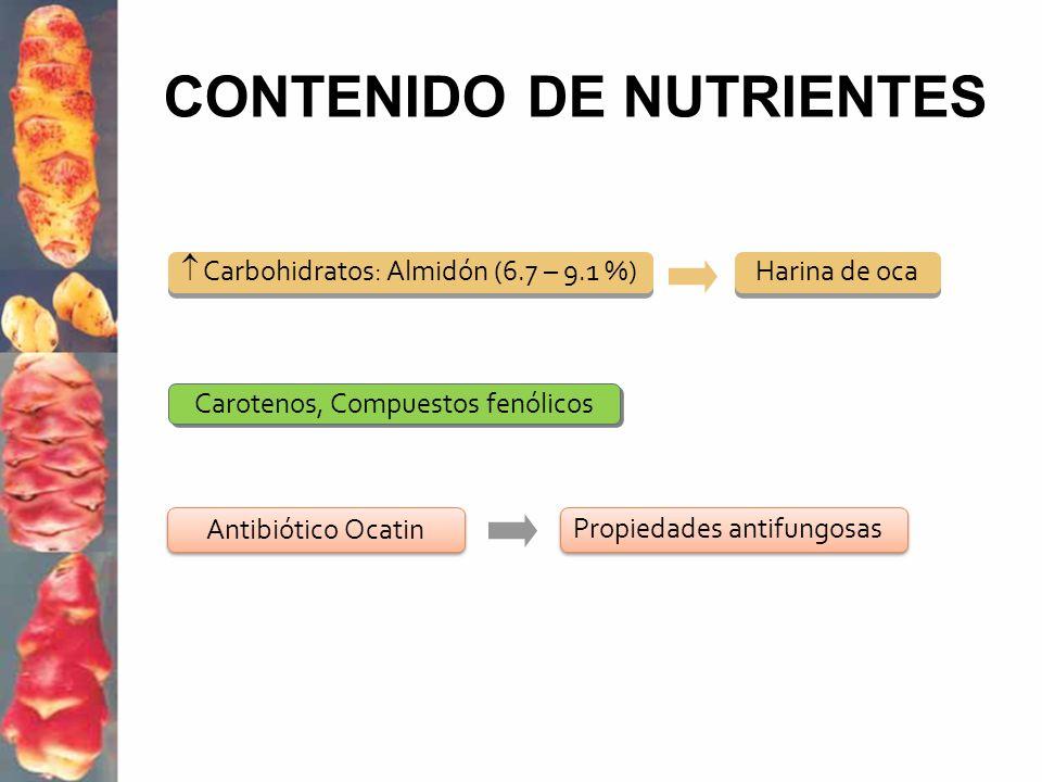 CONTENIDO DE NUTRIENTES Antibiótico Ocatin Propiedades antifungosas Carbohidratos: Almidón (6.7 – 9.1 %) Harina de oca Carotenos, Compuestos fenólicos