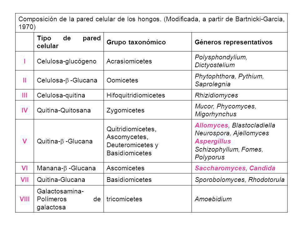 Composición de la pared celular de los hongos. (Modificada, a partir de Bartnicki-Garcia, 1970) Tipo de pared celular Grupo taxonómicoGéneros represen