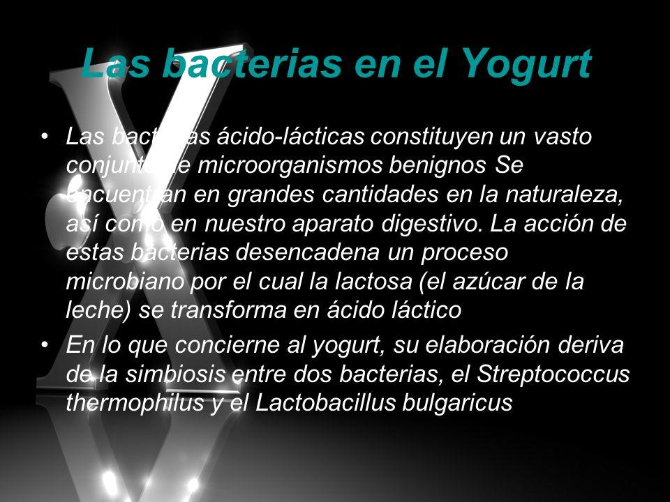 Las bacterias en el Yogurt Las bacterias ácido-lácticas constituyen un vasto conjunto de microorganismos benignos Se encuentran en grandes cantidades