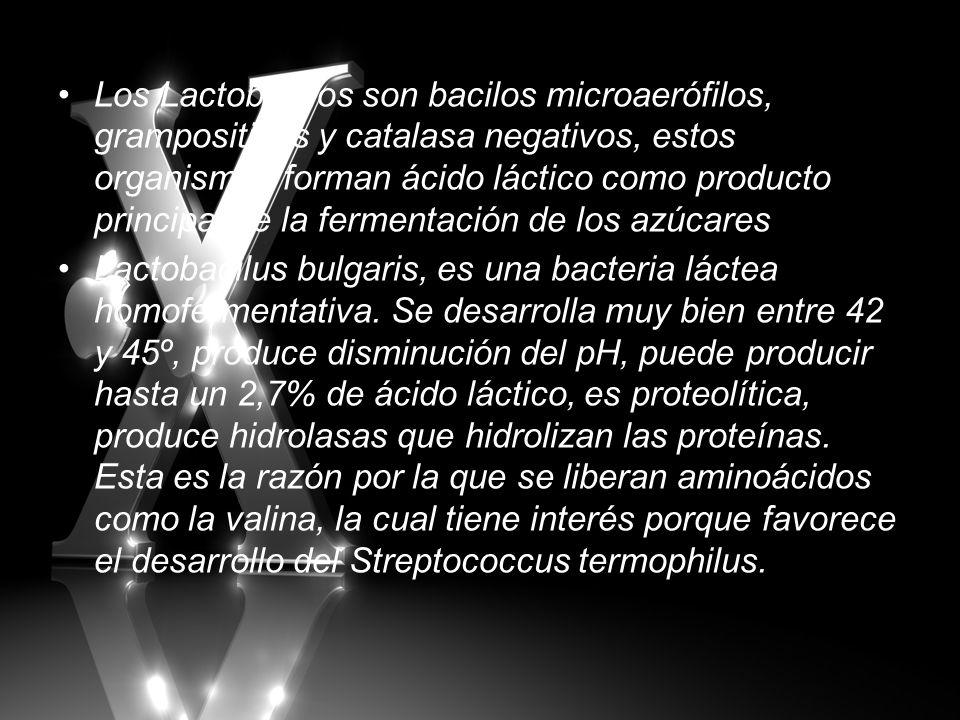 Los Lactobacilos son bacilos microaerófilos, grampositivos y catalasa negativos, estos organismos forman ácido láctico como producto principal de la f