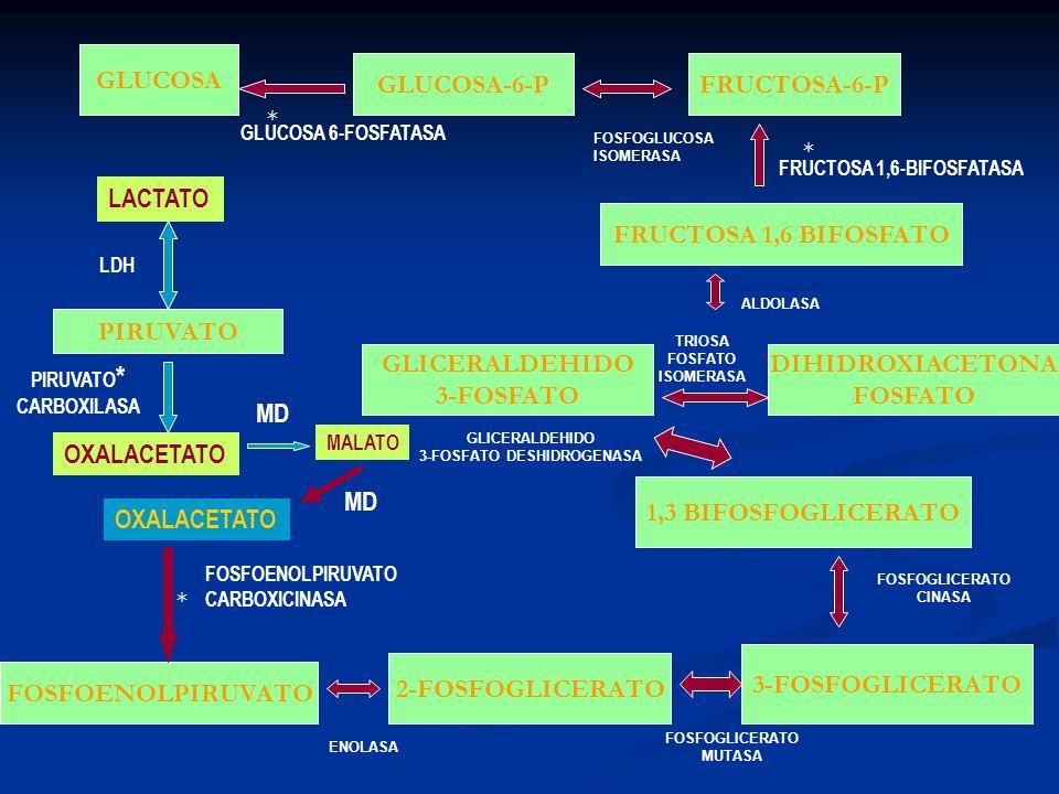 GLUCOSA FOSFOENOLPIRUVATO 2-FOSFOGLICERATO 3-FOSFOGLICERATO 1,3 BIFOSFOGLICERATO GLUCOSA-6-P PIRUVATO DIHIDROXIACETONA FOSFATO FRUCTOSA 1,6 BIFOSFATO