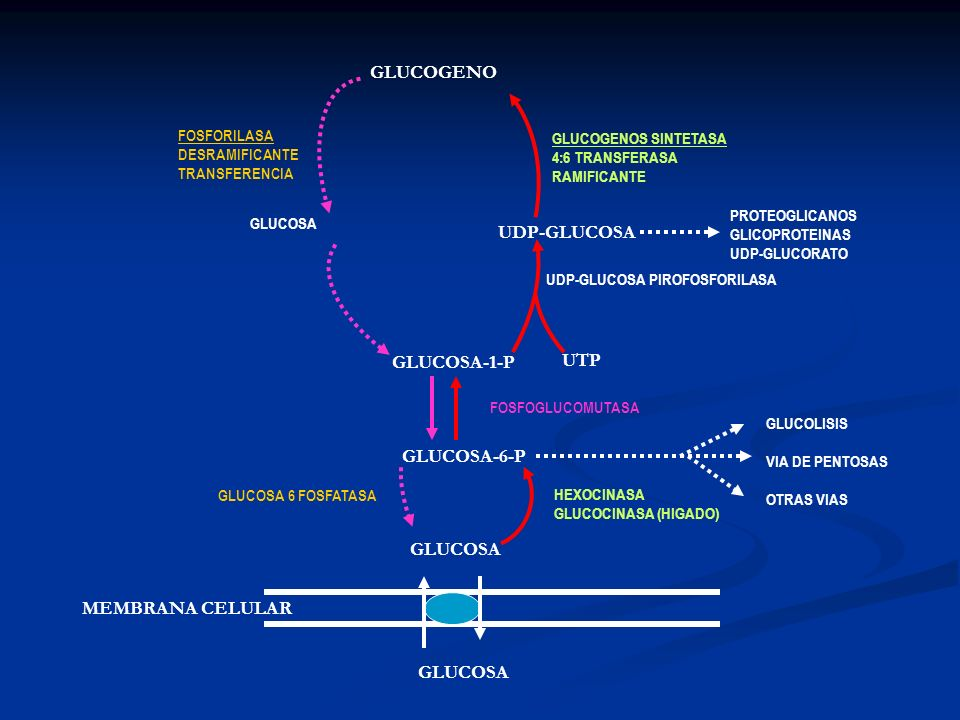 MEMBRANA CELULAR GLUCOSA GLUCOSA-6-P GLUCOSA-1-P GLUCOGENO HEXOCINASA GLUCOCINASA (HIGADO) FOSFOGLUCOMUTASA UTP UDP-GLUCOSA PIROFOSFORILASA UDP-GLUCOS
