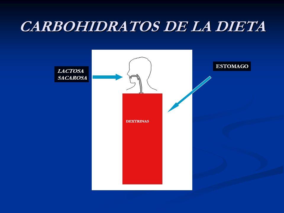 CARBOHIDRATOS DE LA DIETA LACTOSA SACAROSA ESTOMAGO DEXTRINAS