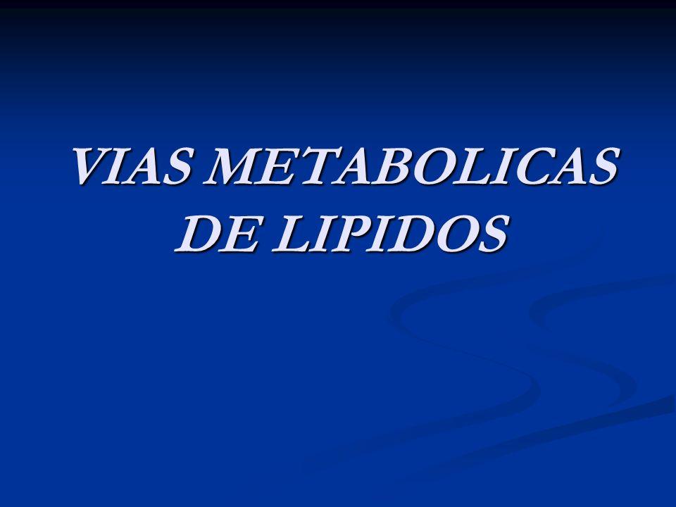 VIAS METABOLICAS DE LIPIDOS