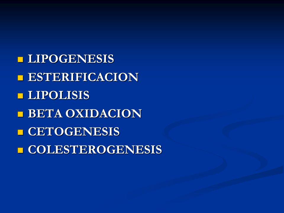 LIPOGENESIS LIPOGENESIS ESTERIFICACION ESTERIFICACION LIPOLISIS LIPOLISIS BETA OXIDACION BETA OXIDACION CETOGENESIS CETOGENESIS COLESTEROGENESIS COLES