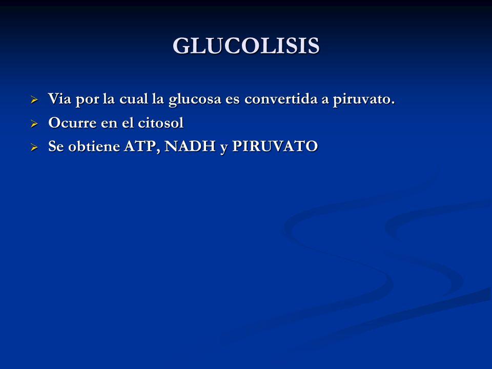 GLUCOLISIS Via por la cual la glucosa es convertida a piruvato. Via por la cual la glucosa es convertida a piruvato. Ocurre en el citosol Ocurre en el