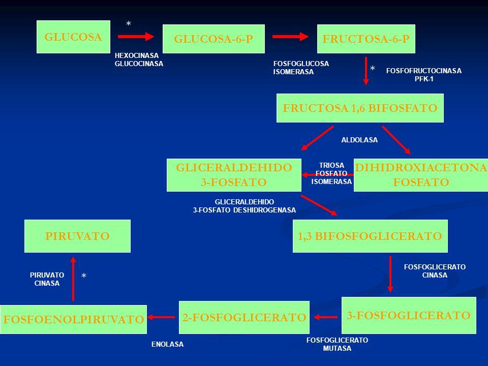 ENZIMAS REGULADORAS DE LA GLUCOLISIS HEXOCINAS ES INHIBIDA POR SU PRODUCTO GLUCOSA 6- FOSFATO HEXOCINAS ES INHIBIDA POR SU PRODUCTO GLUCOSA 6- FOSFATO FOSFOFRUCTOCINASA (PFK-1) FOSFOFRUCTOCINASA (PFK-1) PIRUVATO CINASA PIRUVATO CINASA