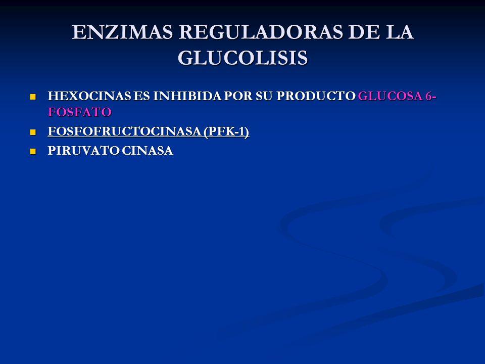 ENZIMAS REGULADORAS DE LA GLUCOLISIS HEXOCINAS ES INHIBIDA POR SU PRODUCTO GLUCOSA 6- FOSFATO HEXOCINAS ES INHIBIDA POR SU PRODUCTO GLUCOSA 6- FOSFATO