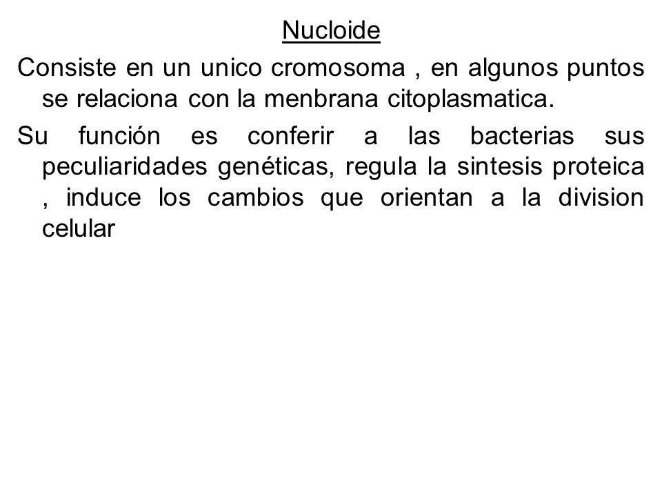 Nucloide Consiste en un unico cromosoma, en algunos puntos se relaciona con la menbrana citoplasmatica.