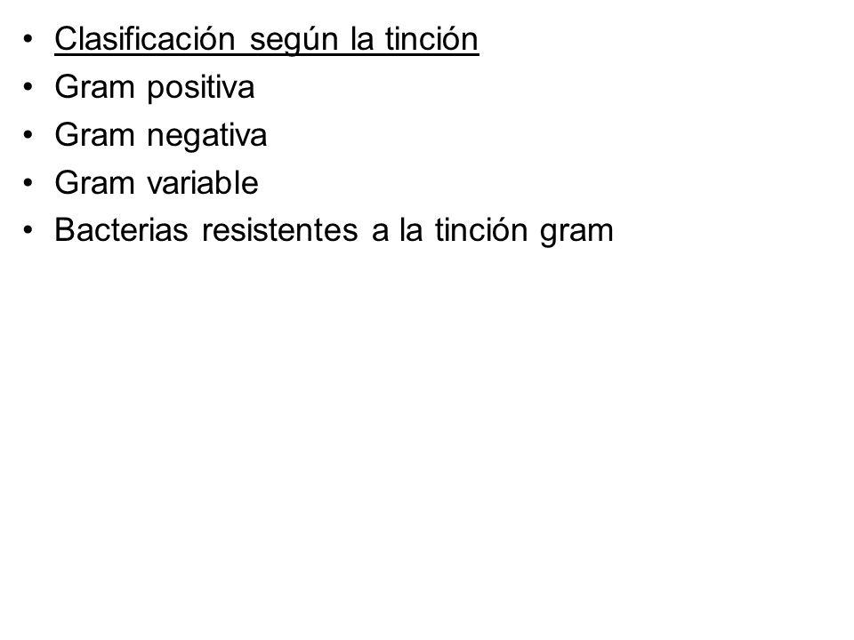 Clasificación según la tinción Gram positiva Gram negativa Gram variable Bacterias resistentes a la tinción gram