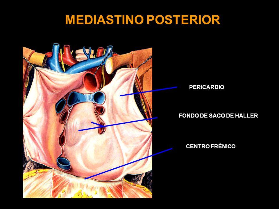 MEDIASTINO POSTERIOR FONDO DE SACO DE HALLER CENTRO FRÉNICO PERICARDIO