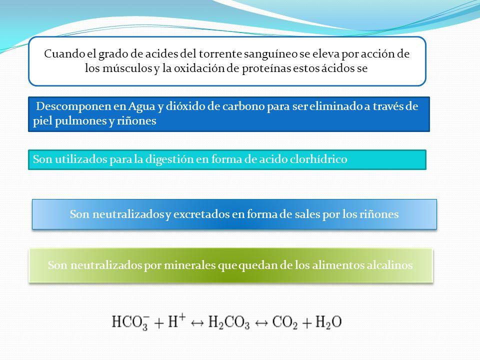 Descomponen en Agua y dióxido de carbono para ser eliminado a través de piel pulmones y riñones Son utilizados para la digestión en forma de acido clo