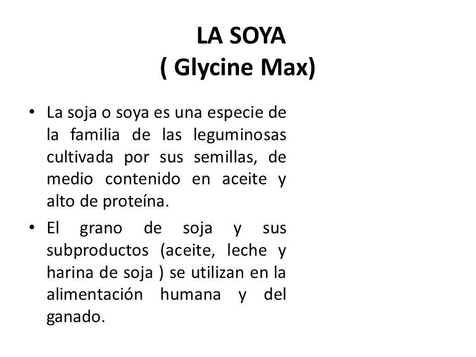 LA SOYA ( Glycine Max) La soja o soya es una especie de la familia de las leguminosas cultivada por sus semillas, de medio contenido en aceite y alto de proteína.