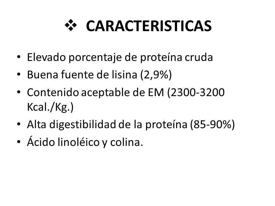CARACTERISTICAS Elevado porcentaje de proteína cruda Buena fuente de lisina (2,9%) Contenido aceptable de EM (2300-3200 Kcal./Kg.) Alta digestibilidad de la proteína (85-90%) Ácido linoléico y colina.