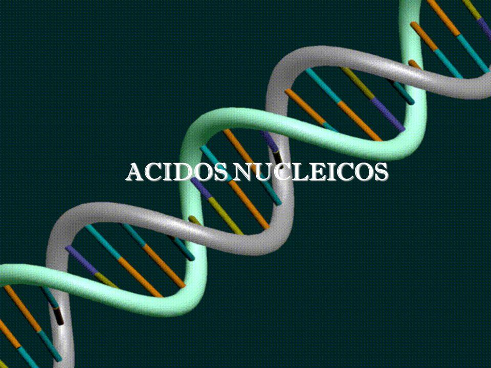 Nunca encontraremos una roca constituida por ácidos nucleicos, proteínas, carbohidratos y lípidos.