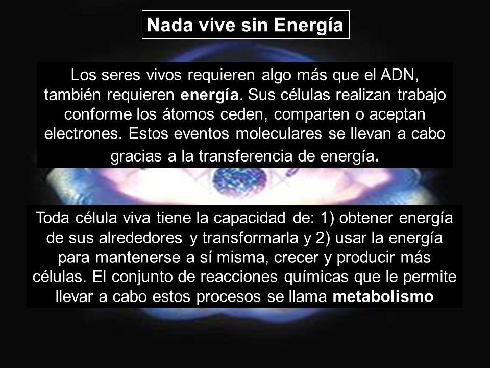Nada vive sin Energía Los seres vivos requieren algo más que el ADN, también requieren energía. Sus células realizan trabajo conforme los átomos ceden