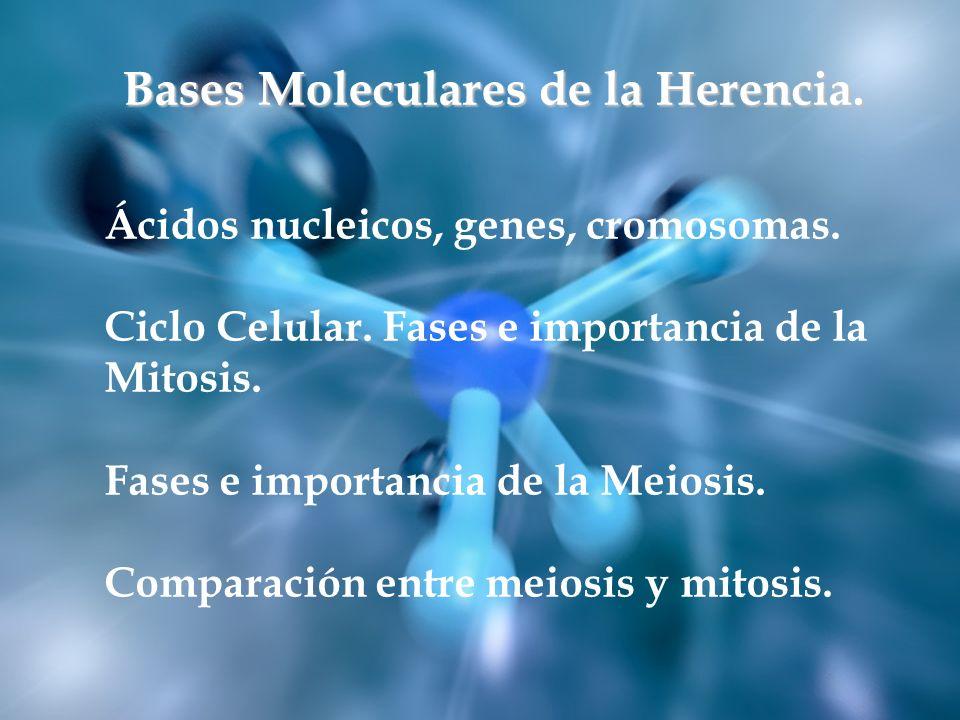 Ácidos nucleicos, genes, cromosomas. Ciclo Celular. Fases e importancia de la Mitosis. Fases Ácidos nucleicos, genes, cromosomas. Ciclo Celular. Fases