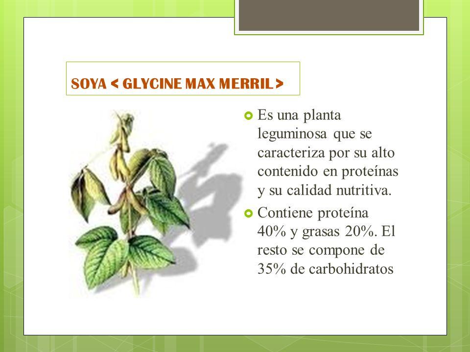 SOYA Es una planta leguminosa que se caracteriza por su alto contenido en proteínas y su calidad nutritiva. Contiene proteína 40% y grasas 20%. El res