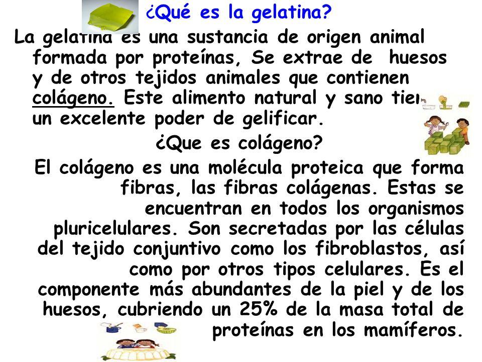 ¿Qué es la gelatina? La gelatina es una sustancia de origen animal formada por proteínas, Se extrae de huesos y de otros tejidos animales que contiene