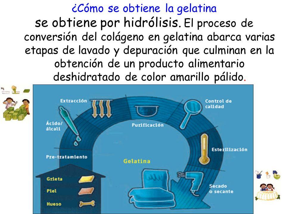 ¿Cómo se obtiene la gelatina se obtiene por hidrólisis. El proceso de conversión del colágeno en gelatina abarca varias etapas de lavado y depuración