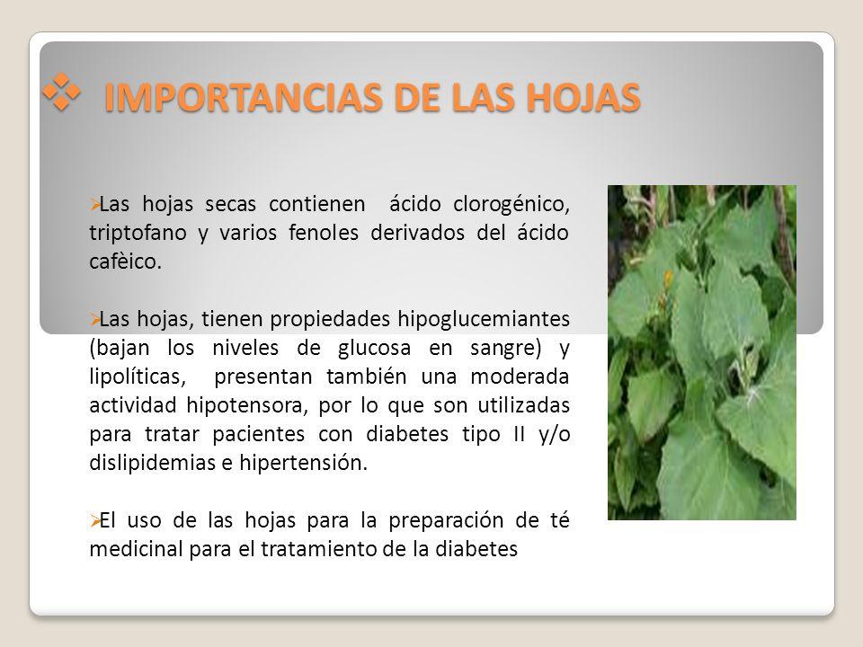 IMPORTANCIAS DE LAS HOJAS IMPORTANCIAS DE LAS HOJAS Las hojas secas contienen ácido clorogénico, triptofano y varios fenoles derivados del ácido cafèi