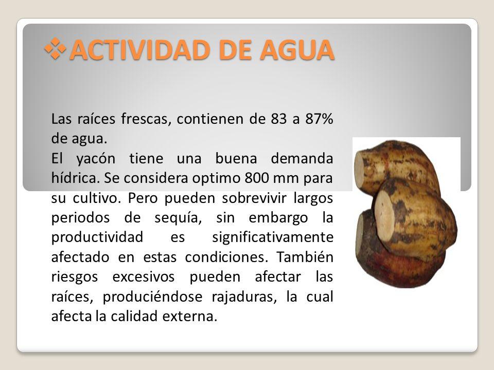 ACTIVIDAD DE AGUA ACTIVIDAD DE AGUA Las raíces frescas, contienen de 83 a 87% de agua. El yacón tiene una buena demanda hídrica. Se considera optimo 8