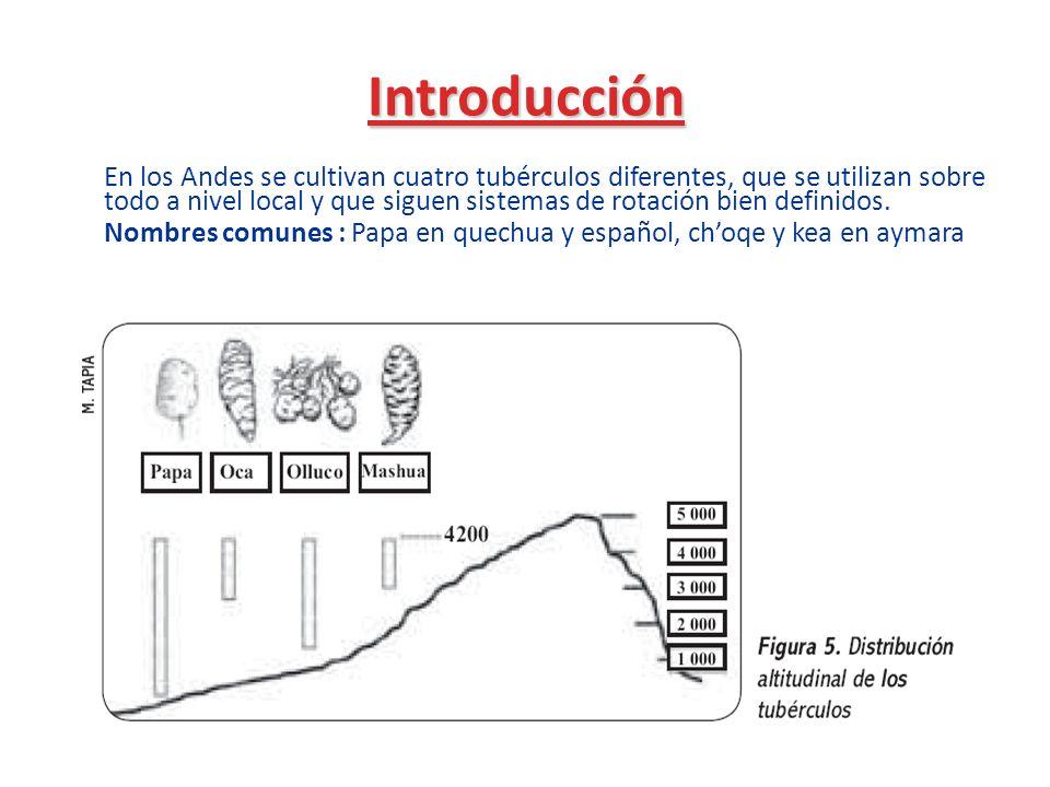 Introducción En los Andes se cultivan cuatro tubérculos diferentes, que se utilizan sobre todo a nivel local y que siguen sistemas de rotación bien de
