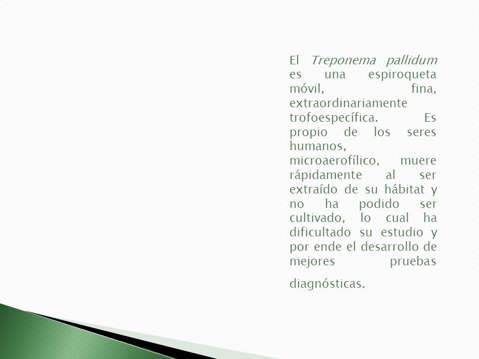 El Treponema pallidum es una espiroqueta móvil, fina, extraordinariamente trofoespecífica. Es propio de los seres humanos, microaerofílico, muere rápi