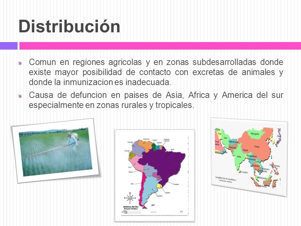 Distribución Comun en regiones agricolas y en zonas subdesarrolladas donde existe mayor posibilidad de contacto con excretas de animales y donde la in
