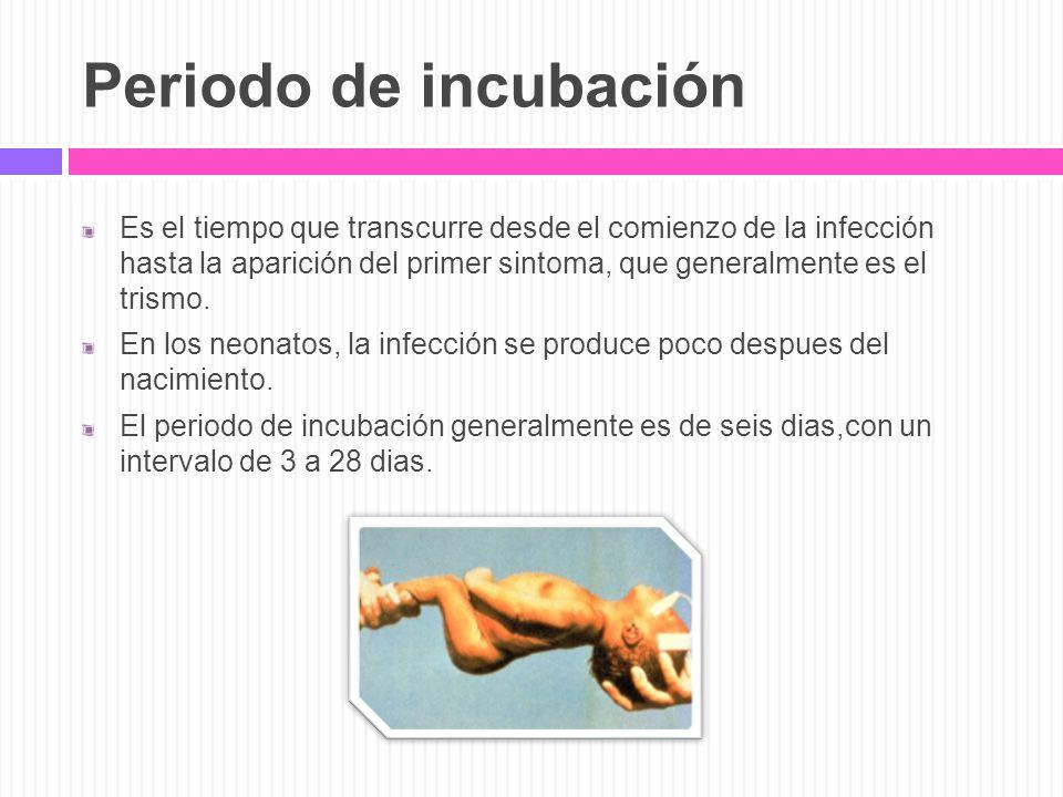 Periodo de incubación Es el tiempo que transcurre desde el comienzo de la infección hasta la aparición del primer sintoma, que generalmente es el tris