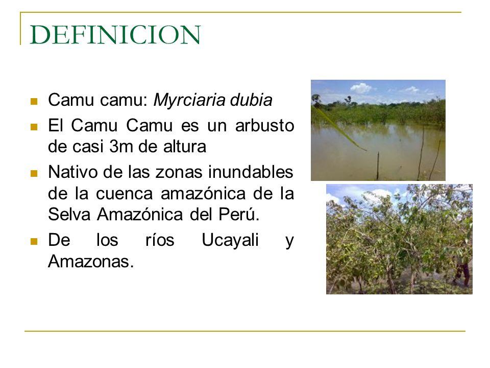 DEFINICION Camu camu: Myrciaria dubia El Camu Camu es un arbusto de casi 3m de altura Nativo de las zonas inundables de la cuenca amazónica de la Selv