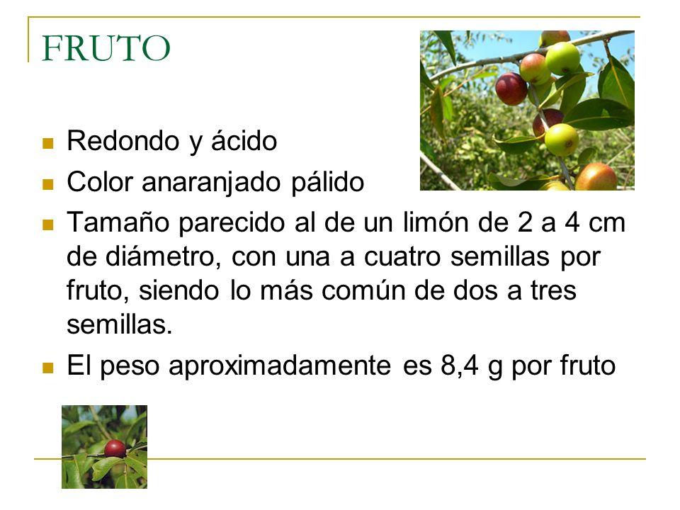 FRUTO Redondo y ácido Color anaranjado pálido Tamaño parecido al de un limón de 2 a 4 cm de diámetro, con una a cuatro semillas por fruto, siendo lo m
