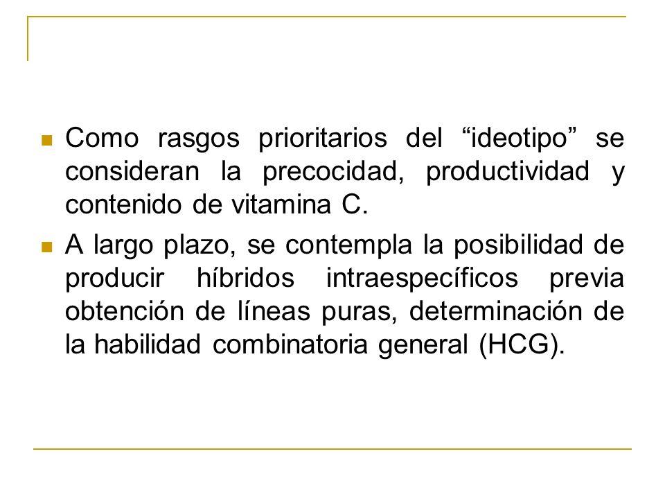 Como rasgos prioritarios del ideotipo se consideran la precocidad, productividad y contenido de vitamina C. A largo plazo, se contempla la posibilidad