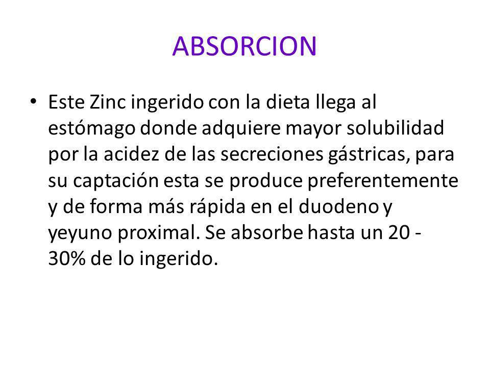 ABSORCION Este Zinc ingerido con la dieta llega al estómago donde adquiere mayor solubilidad por la acidez de las secreciones gástricas, para su capta