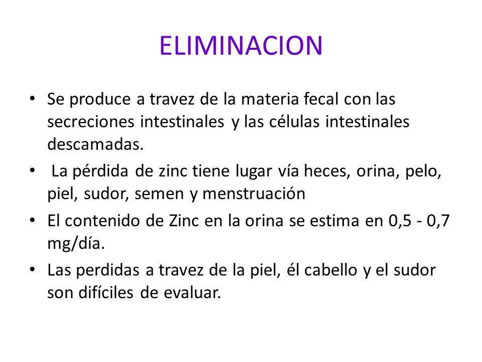 ELIMINACION Se produce a travez de la materia fecal con las secreciones intestinales y las células intestinales descamadas. La pérdida de zinc tiene l