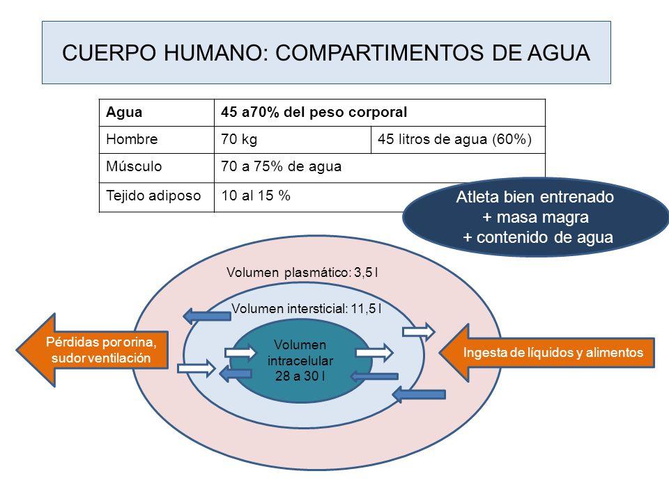 CUERPO HUMANO: COMPARTIMENTOS DE AGUA Volumen intracelular 28 a 30 l Agua45 a70% del peso corporal Hombre70 kg45 litros de agua (60%) Músculo70 a 75%