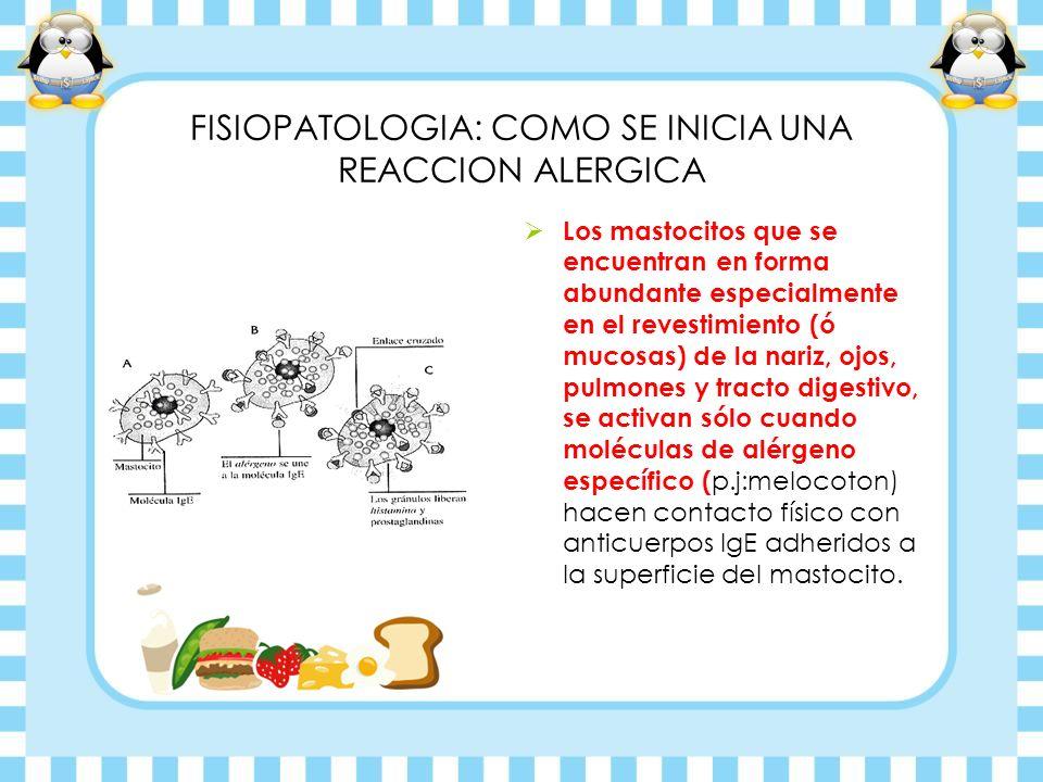 FISIOPATOLOGIA: COMO SE INICIA UNA REACCION ALERGICA Los mastocitos que se encuentran en forma abundante especialmente en el revestimiento (ó mucosas)