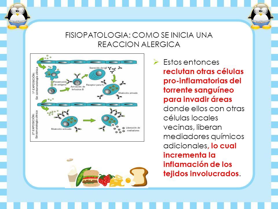 FISIOPATOLOGIA: COMO SE INICIA UNA REACCION ALERGICA Estos entonces reclutan otras células pro-inflamatorias del torrente sanguíneo para invadir áreas
