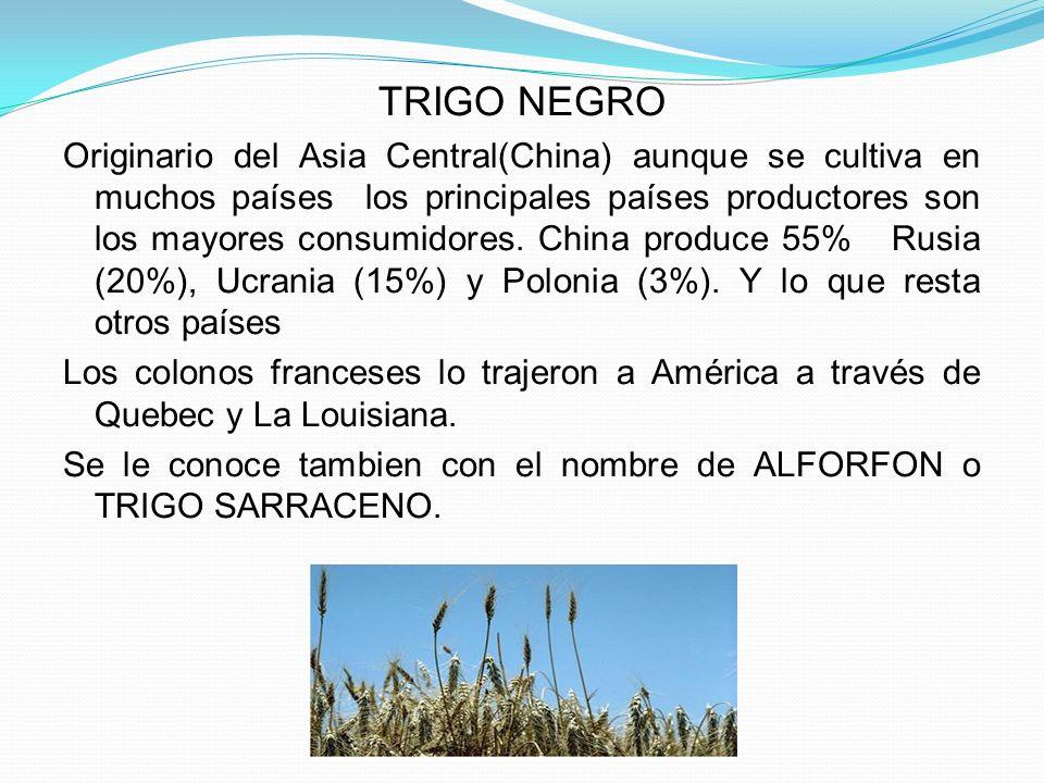 VARIEDADES DE TRIGO NEGRO El esculentum emarginatum tartaricum Crece espontáneamente en Manchuria.