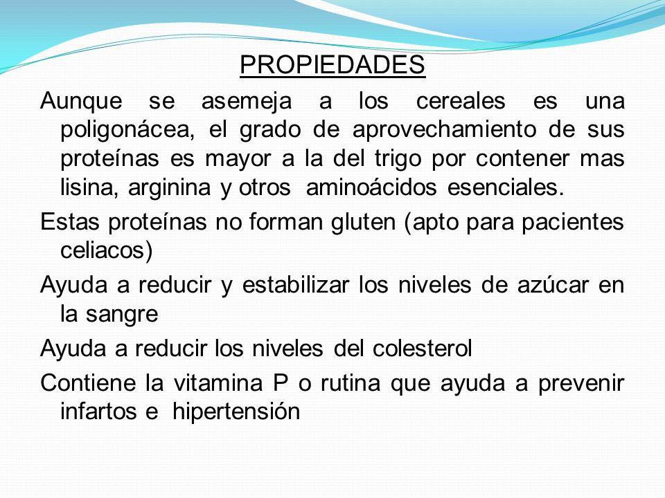 PROPIEDADES Aunque se asemeja a los cereales es una poligonácea, el grado de aprovechamiento de sus proteínas es mayor a la del trigo por contener mas