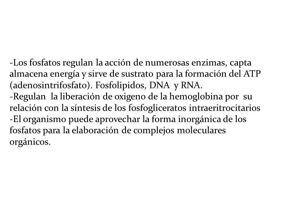 METABOLISMO DE LOS FOSFATOS -La regulación de los fosfato están ligados en forma estrecha con la homeostasis del calcio,.