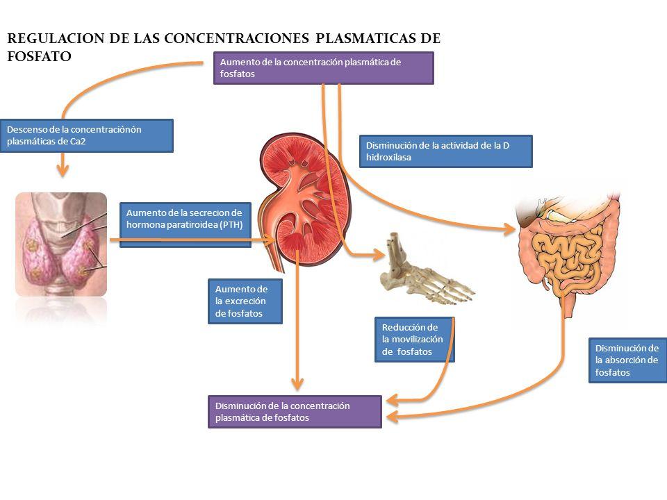 Disminución de la absorción de fosfatos Aumento de la concentración plasmática de fosfatos Aumento de la secrecion de hormona paratiroidea (PTH) Aumen