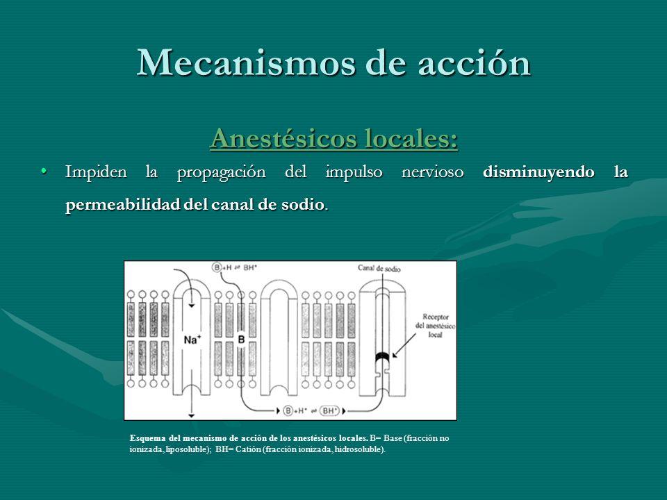 Mecanismos de acción Anestésicos locales: Impiden la propagación del impulso nervioso disminuyendo la permeabilidad del canal de sodio.Impiden la prop