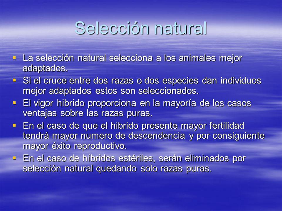Selección natural La selección natural selecciona a los animales mejor adaptados. La selección natural selecciona a los animales mejor adaptados. Si e