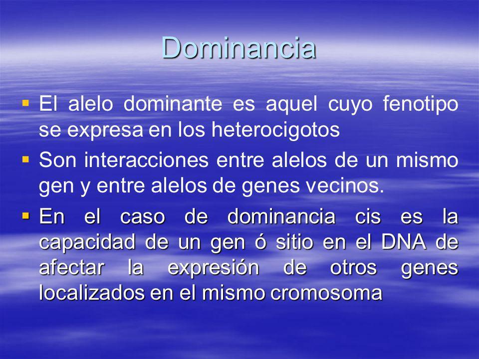 Dominancia El alelo dominante es aquel cuyo fenotipo se expresa en los heterocigotos Son interacciones entre alelos de un mismo gen y entre alelos de
